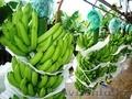 Бананы ZOE BANANA