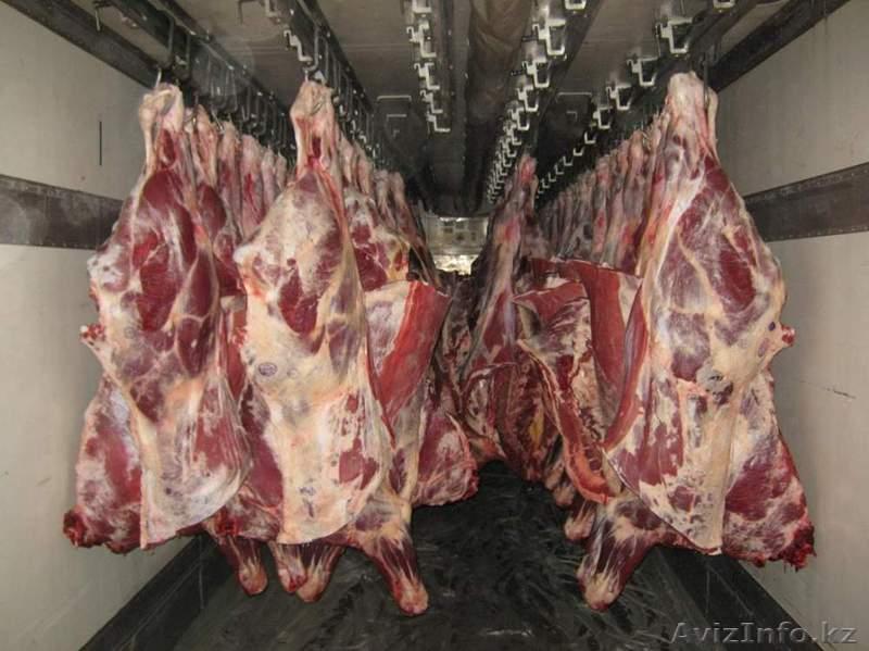 Куплю мясо свинины объявления 2008 год услуги печника объявления